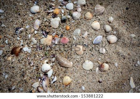 Macro of Black sea shells on sand background , Bulgaria - stock photo