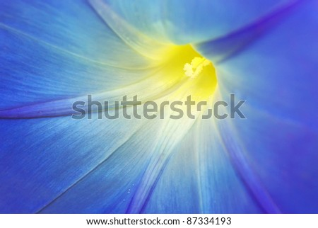 Macro of blue flower. Nature composition. - stock photo