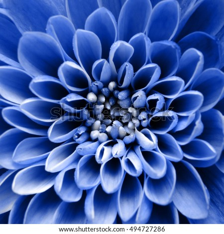 Macro of blue flower petals for greetings background
