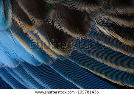 Macro of blue parrot feathers - stock photo