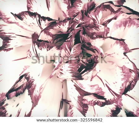 Macro of Carnation Flower Center. Flower is in a shabby sheek vintage and retro style. - stock photo