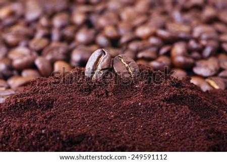 Macro of coffee beans - stock photo