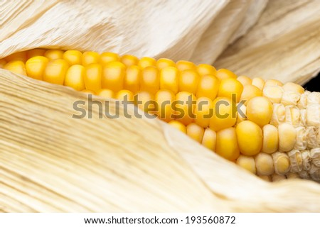 Macro of ear of corn for background