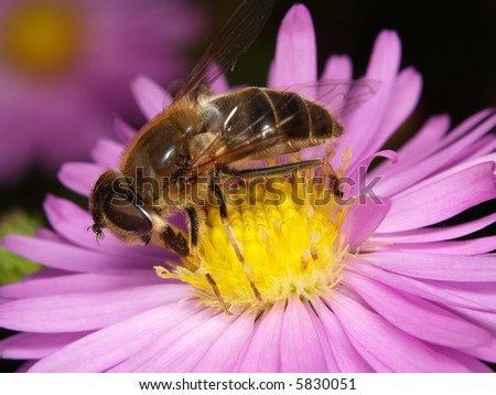 Macro of fly in flower