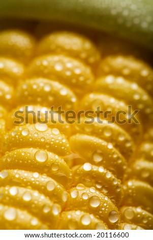 macro of fresh maize corns - stock photo