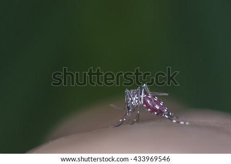 Macro of full blood in mosquito body during bite human skin - stock photo