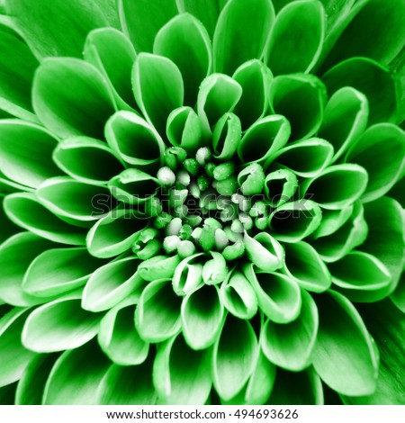 Macro of green flower petals for greetings background