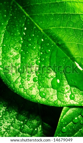 macro of green leaves with water drops - stock photo