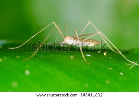 Macro of insect on green leaf - stock photo