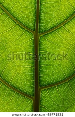 macro of leaf - stock photo