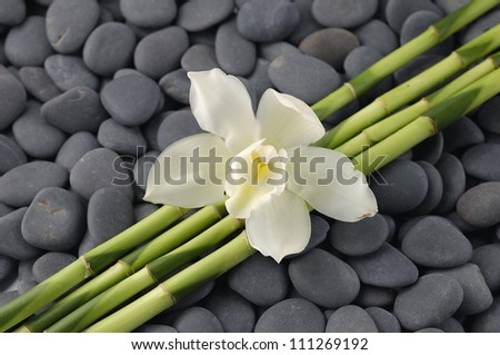 Macro of orchid and thin bamboo grove on zen pebbles background