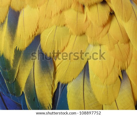 Macro of Parrot Feathers - stock photo