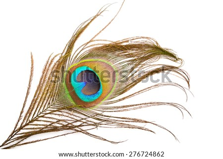 Macro of peacock feather eye on white background
