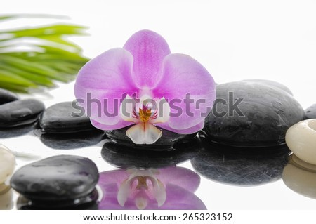 Macro of pink orchid and wet black stones ,candle with palm leaf - stock photo