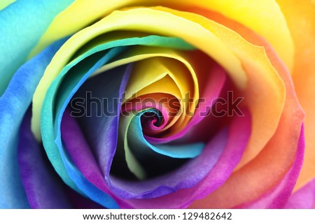 Multi colored stock photos images pictures shutterstock for Multi colored rose petals