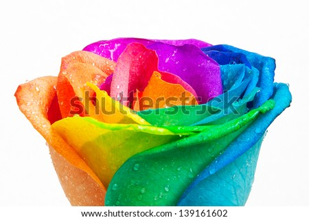 Rainbow rose stock photos images pictures shutterstock for Multi colored rose petals