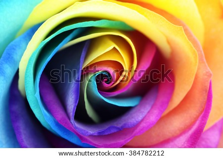 Macro of rainbow rose heart flower and multi colored petals - stock photo