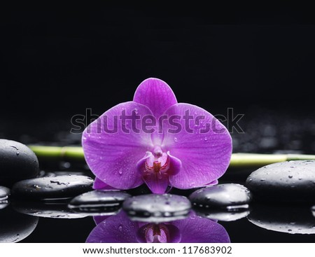 macro of red orchid with bamboo grove on pebble - stock photo