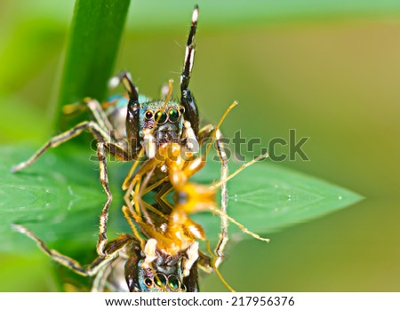 Macro of spider eating an ant - stock photo