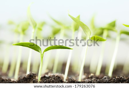 Macro of vegetable plantlet over seedlings background  - stock photo