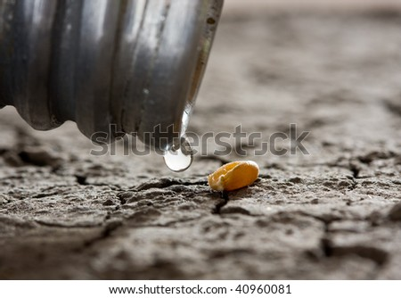 macro of water drop and one corn over dry soil - hope concept - stock photo
