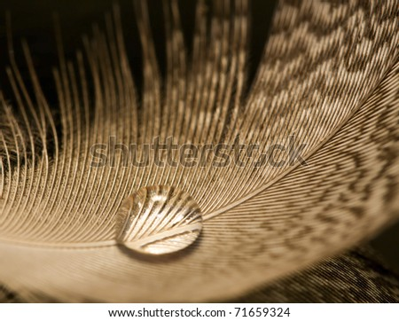 Macro of water drop on white feather detail pattern - stock photo