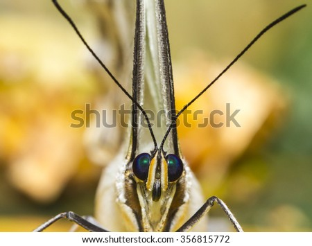 Macro of white blue eyed tropical butterfly facing camera - stock photo