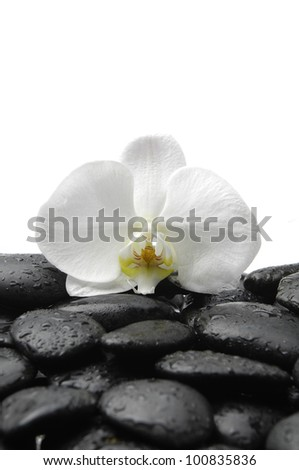Macro of white orchid and spa stones