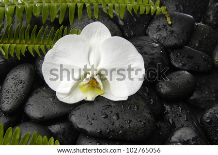 Macro of white orchid with set of fern on wet pebbles background