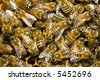 Macro of working bees on the honeycells. - stock photo