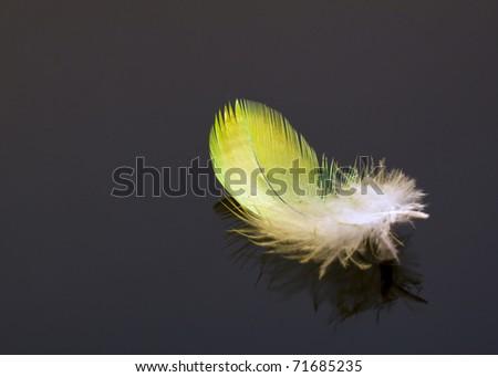 Macro of yellow feather on dark background detail - stock photo