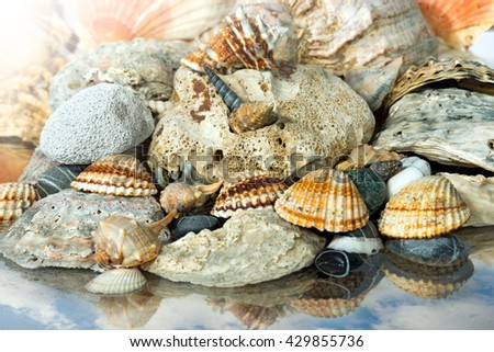 Macro photo of a group of seashells and pebbles on the seashore with the reflection of the sky - stock photo