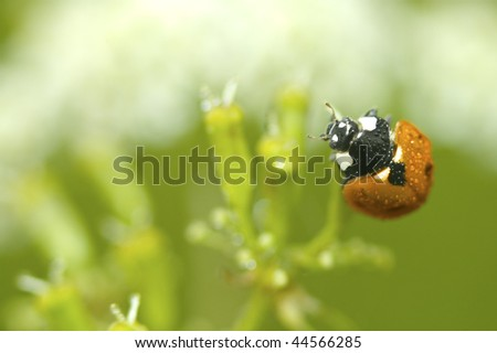 macro photo of a single ladybug, blurred plant, shallow depth of field