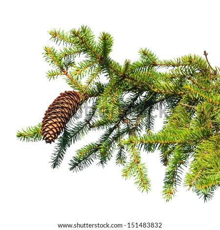Macro photo of fir tree branch with cone isolated on white - stock photo
