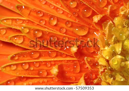 Macro photo of flower with water drops - stock photo