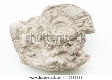 macro photo of fossil of ammonites isolated over white - stock photo
