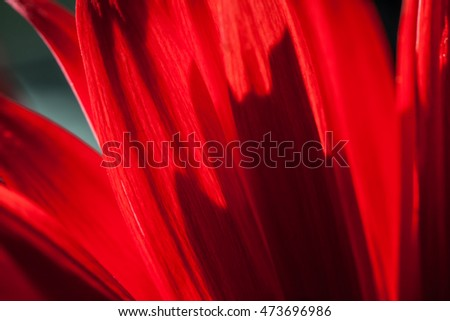 Macro photo of gerbera flower. Selective focus