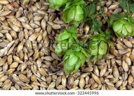 Macro photo of hops and malt as background. - stock photo