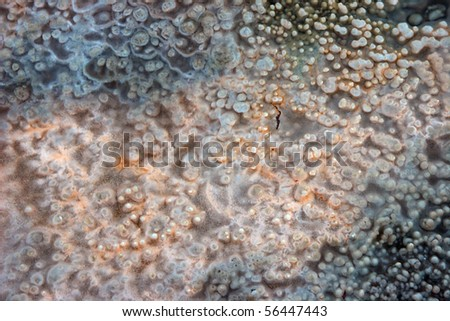 Macro photo of hot spring mineral - stock photo