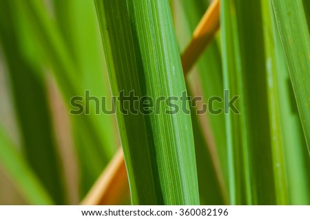 Macro photo of leaf green and fresh of garden  - stock photo