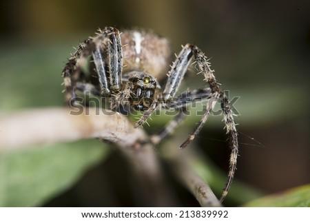 Macro photograph of a garden spider - stock photo