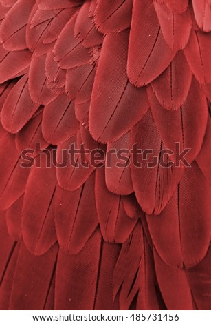 Macro photograph of the red feathers of a macaw.
