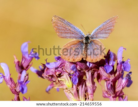 macro picture of a moth on wild flowers - stock photo
