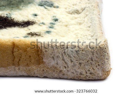Rhizopus Stock Images, Royalty-Free Images & Vectors ...