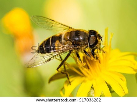 Macro pictures of bees, flies, and bugs. Captured on a nice summer day.