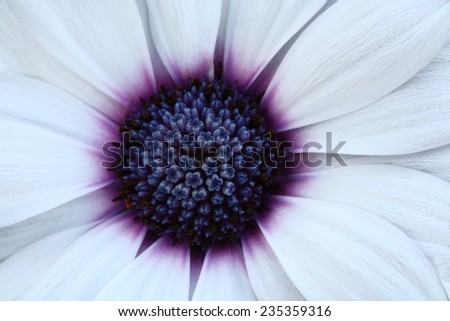 macro pollen flower - stock photo