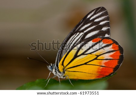 Macro shot colourful Butterfly, Chonburi Thailand - stock photo
