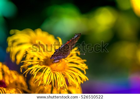 Macro shot of a butterfly sitting on a blossom in the garden on a sunny summer day on a bright and colorful background