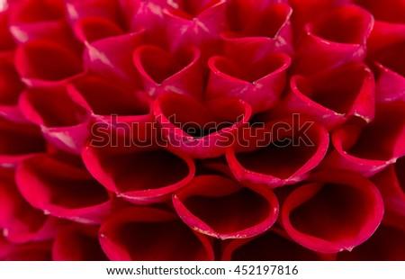 Macro shot of a Dahlia flower - stock photo