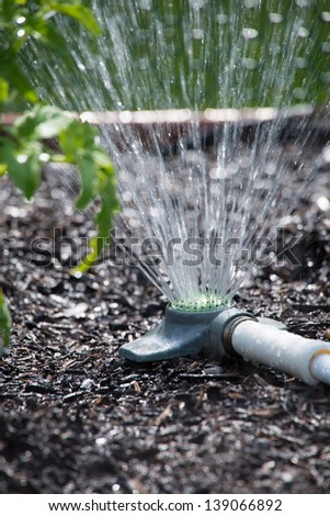 Macro shot of a garden sprinkler with water flowing out in a spray over the soil and plants. - stock photo